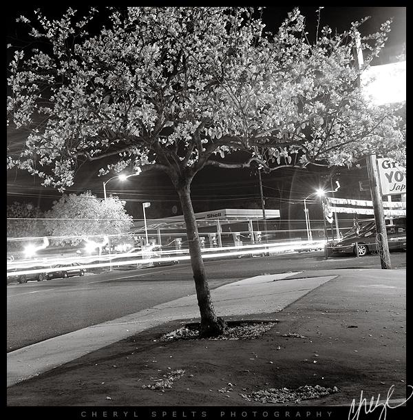 Mission Avenue at Night // Photo: Cheryl Spelts