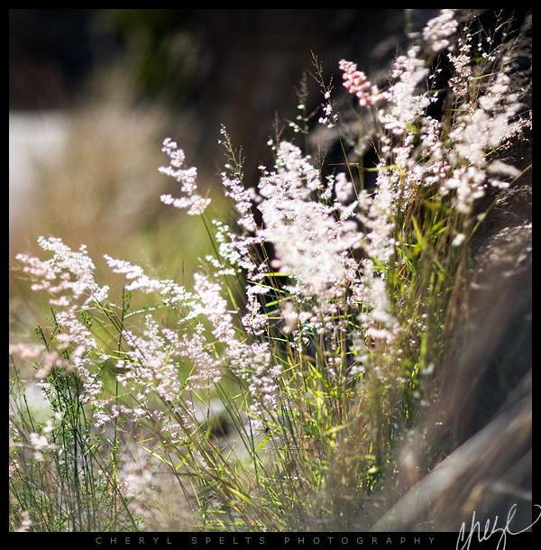 Backlit Weeds in De Luz // Photo: Cheryl Spelts