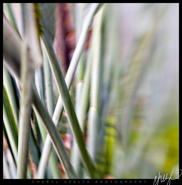 Lensbaby Bird of Paradise Stalks // Photo: Cheryl Spelts
