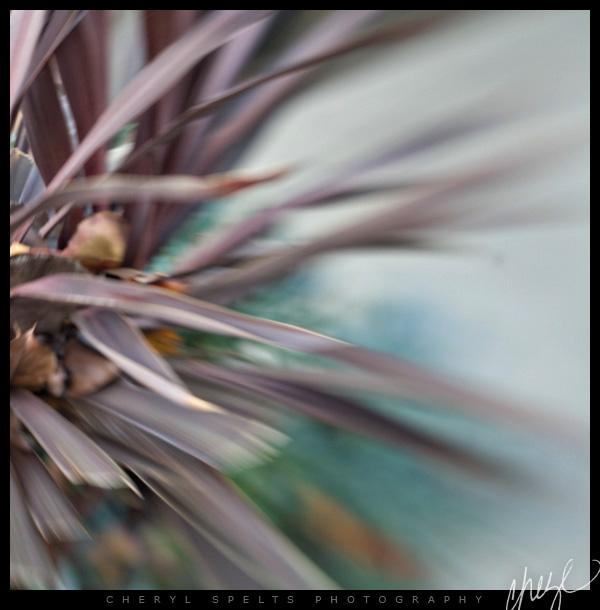Lensbaby. Fallbrook, California // Photo: Cheryl Spelts