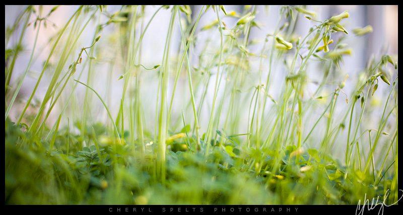 Yellow Weeds // Photo: Cheryl Spelts