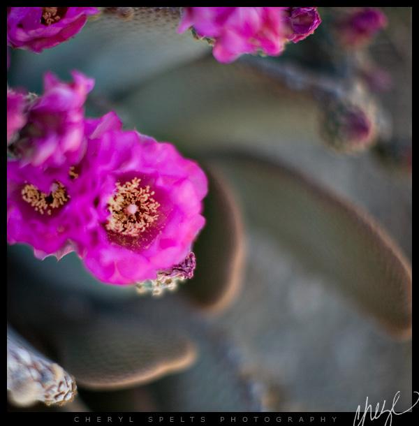 Desert Hot Springs // Photo: Cheryl Spelts