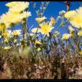 Yellow & Blue // Photo: Cheryl Spelts