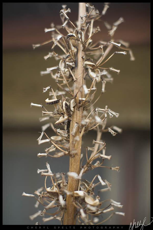 Weeds in Fallbrook // Photo: Cheryl Spelts
