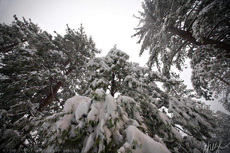 Snowy Trees in Idyllwild // Photo: Cheryl Spelts