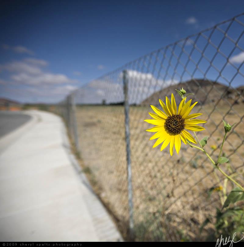 Bright Shiny Future in Suburbia // Photo: Cheryl Spelts