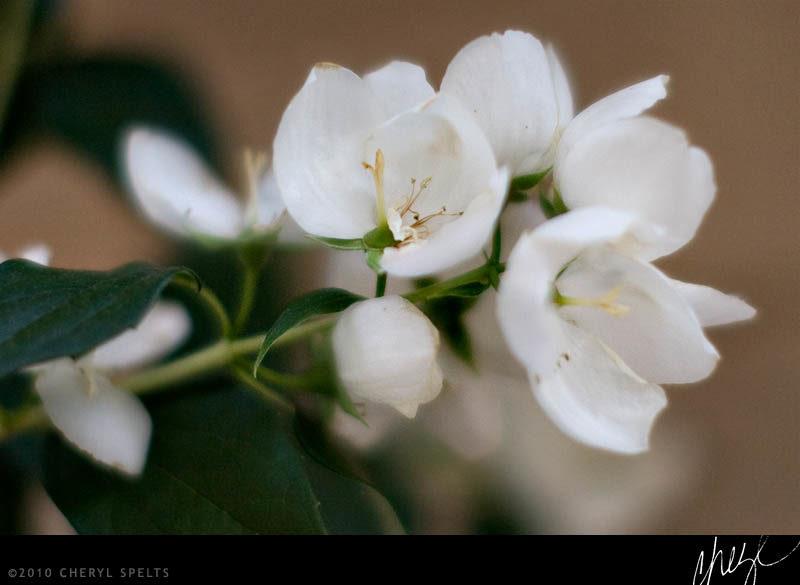 Idyllwild Flowers