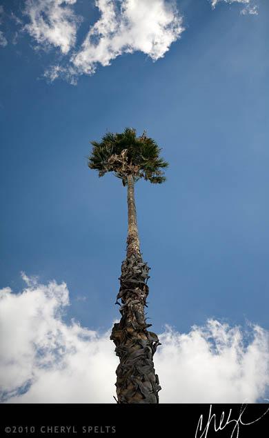 My Palm Tree // Photo: Cheryl Spelts