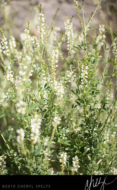 Pretty Weeds // Photo: Cheryl Spelts
