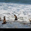 Ocean Birds // Photo: Cheryl Spelts