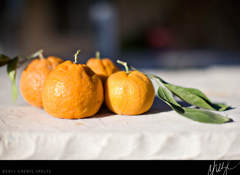 Tangerines // Photo: Cheryl Spelts