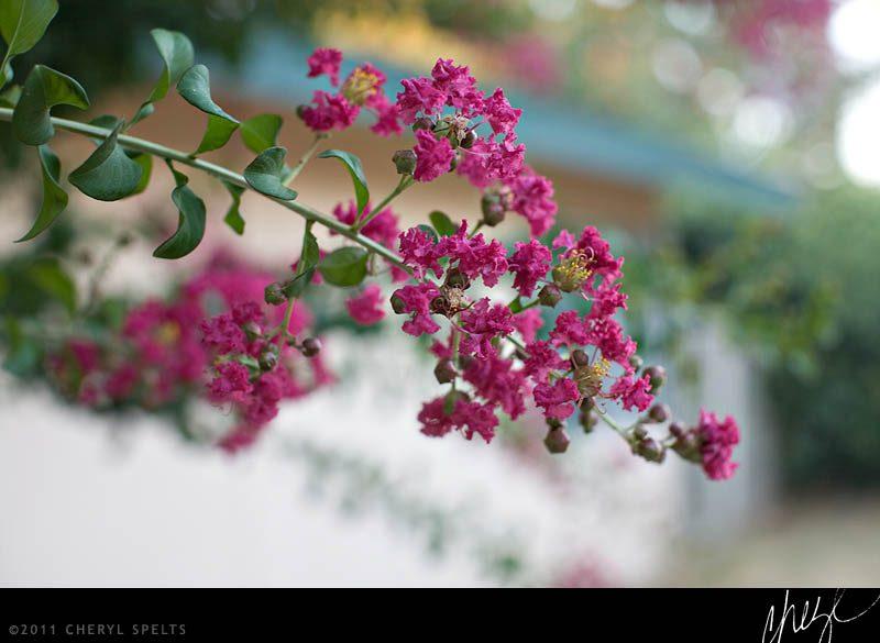 Pink Tree // Photo: Cheryl Spelts