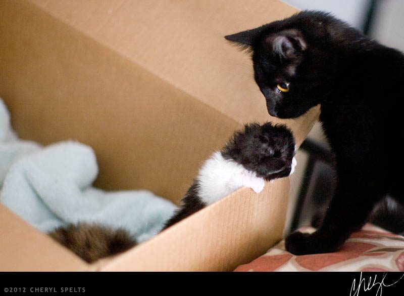 Kitten escaping box // Photo: Cheryl Spelts