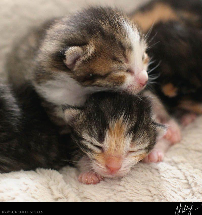 Kitten Pile // Photo: Cheryl Spelts