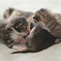 Kitten Pile // Photo: Cheryl Spelts