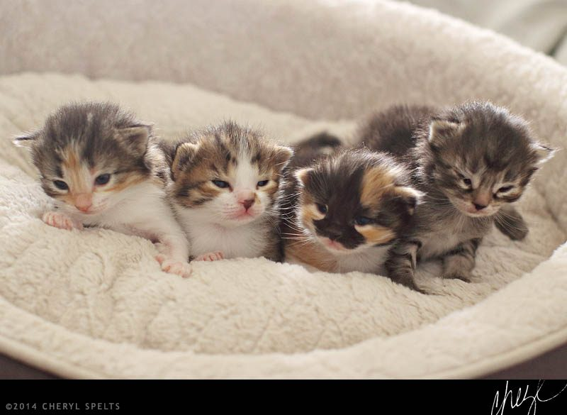 Baby Kittens // Photo: Cheryl Spelts