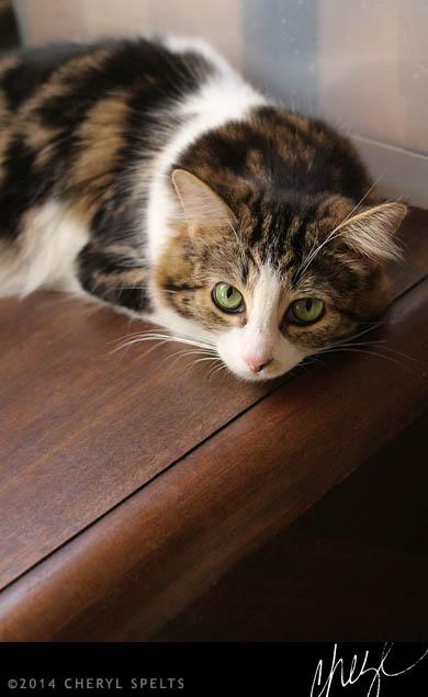 Guilty Cat // Photo: Cheryl Spelts