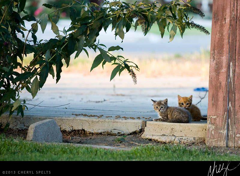 Two Kittens // Photo: Cheryl Spelts