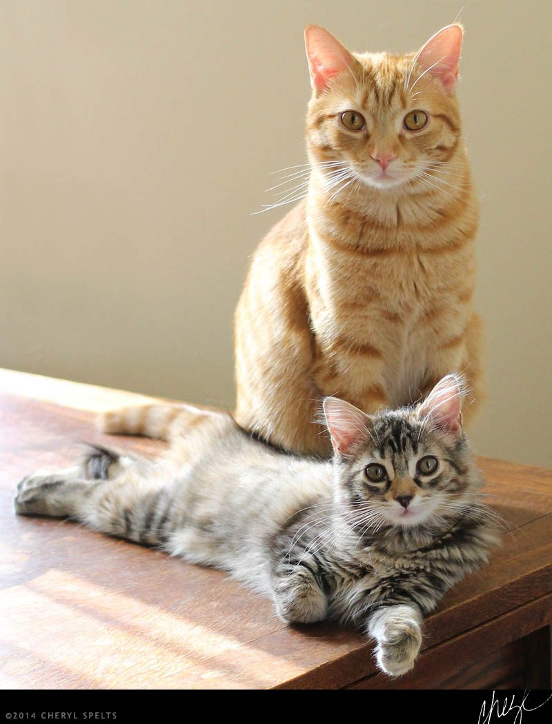 Father and Daughter Cats // Photo: Cheryl Spelts