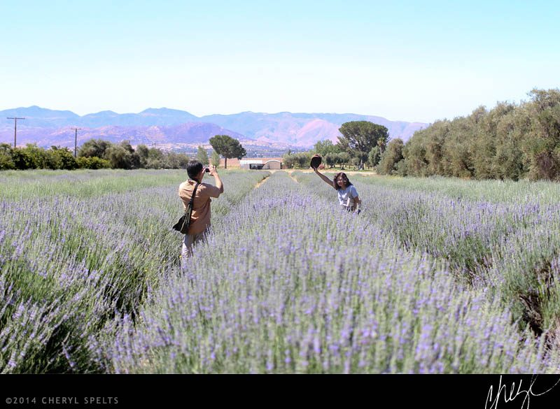 Tourists pose for photos at the Lavender Festival // Photo: Cheryl Spelts