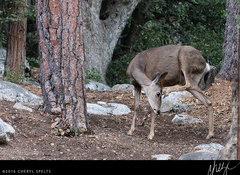 Mama Deer // Photo: Cheryl Spelts