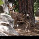 Spotted Baby Deer // Photo: Cheryl Spelts