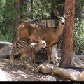 Mama Deer and baby deer // Photo: Cheryl Spelts