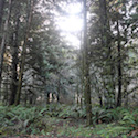 The forest near Trinidad State Beach // Photo: Cheryl Spelts