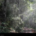 The Forest in Del Norte County, in Northern California.